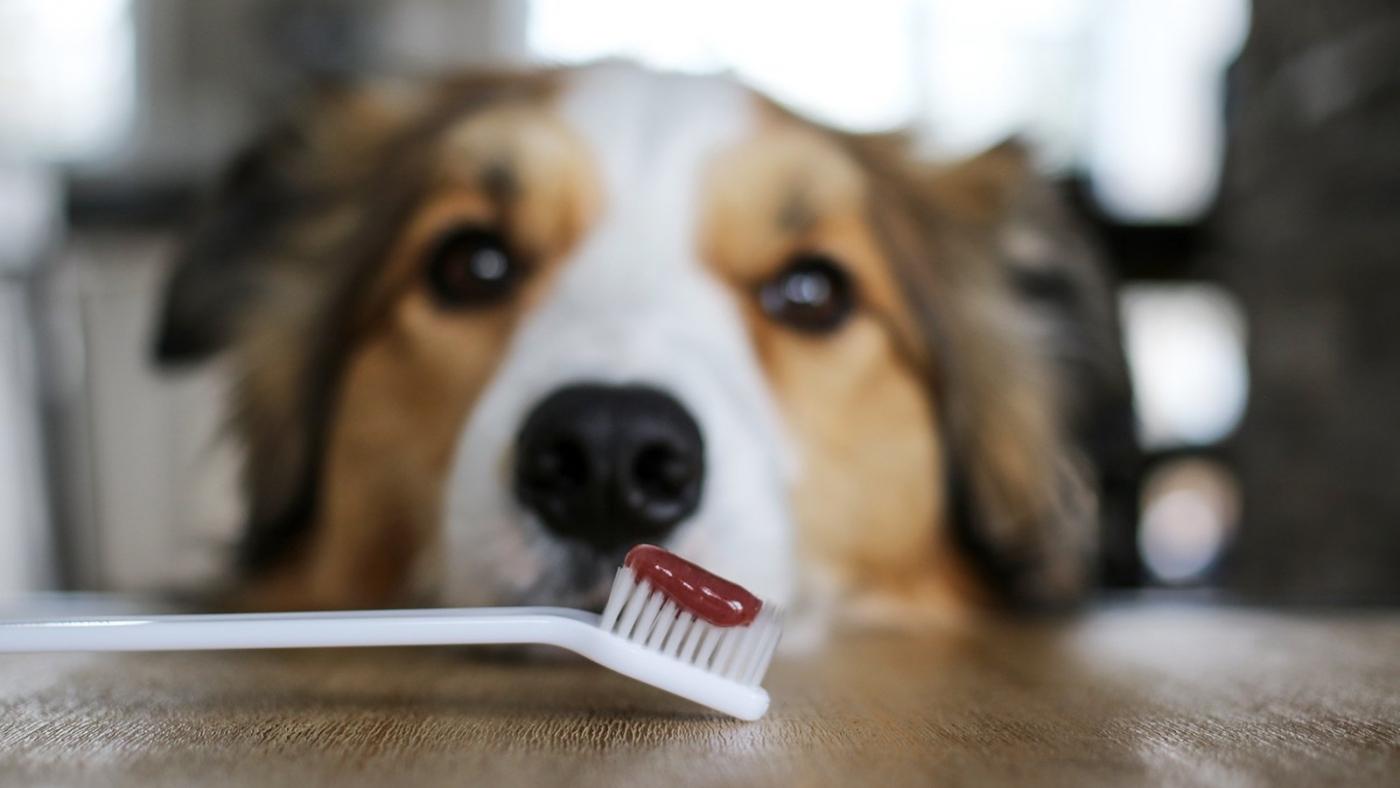 Brossage de dents chien